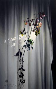 Černobílý obraz s barevným akcentem